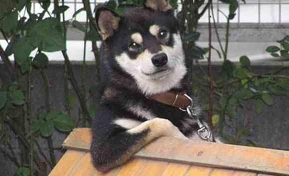 犬 運転 筋肉に関連した画像-01
