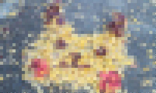 落ち葉 アート ピカチュウに関連した画像-01