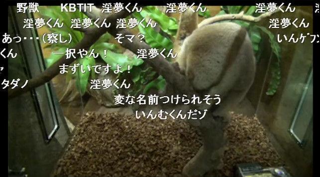 淫夢くん ニコニコ公式 スローロリス ニコニコ生放送に関連した画像-02