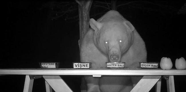 クマ 熊 対策 養蜂家 逆転 発送 に関連した画像-02