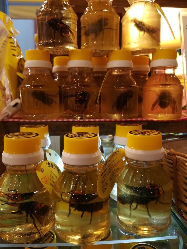 養蜂家 オオスズメバチ はちみつ漬けに関連した画像-03