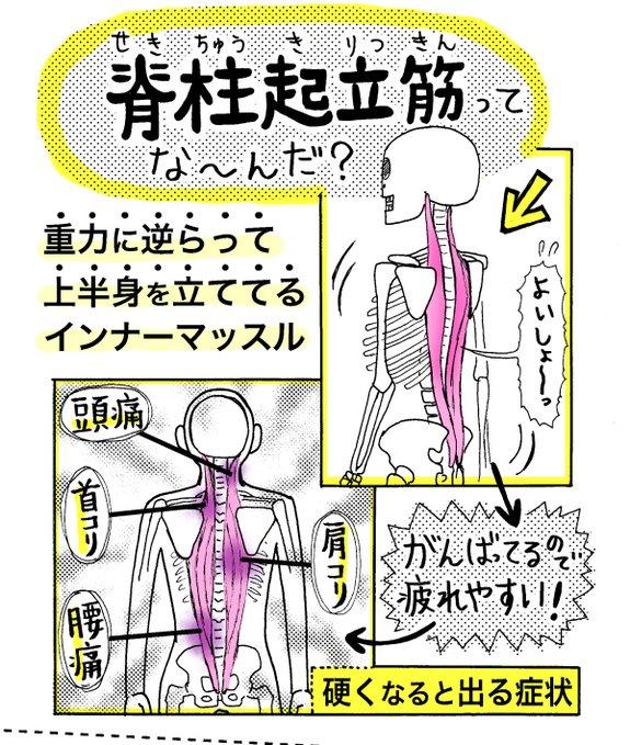 ストレッチ 腰痛 背筋に関連した画像-04