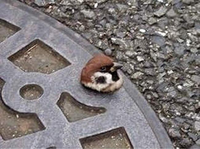 マンホール ネズミ 表情に関連した画像-04