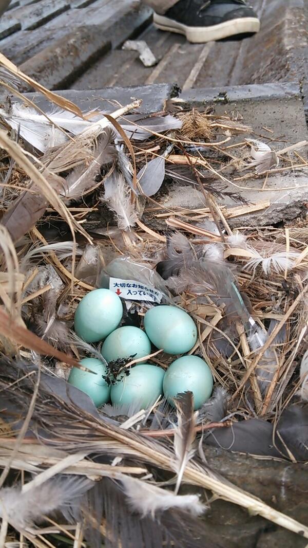 鳥の巣に関連した画像-02