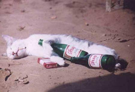 泥酔 ゴミ箱に関連した画像-01