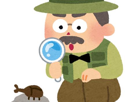 ムカデ ゴキブリ 新種 沖縄 罰則 環境省 保護 虫に関連した画像-01
