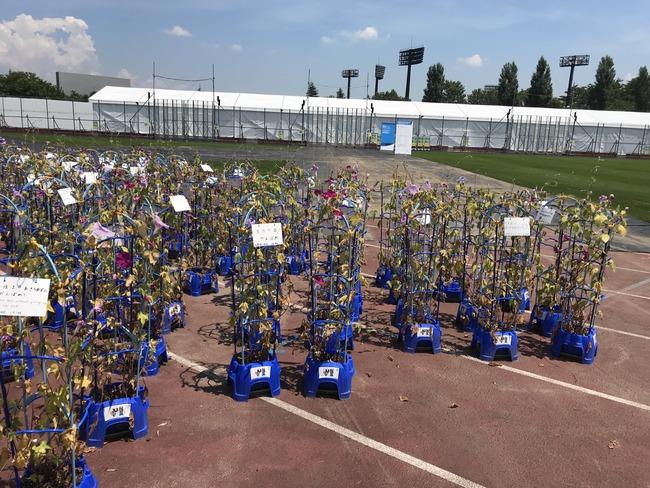 福島県 アサガオ 東京五輪 枯れる 朝顔 子供 オリンピックに関連した画像-05