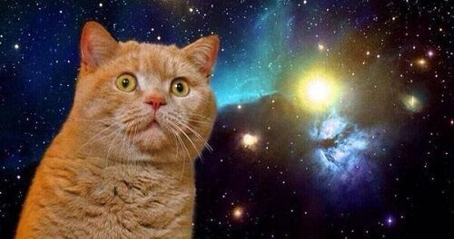 SNS目的猫放り投げ動画に関連した画像-01