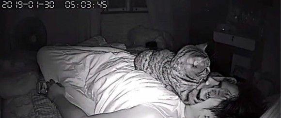 猫 就寝時 行動に関連した画像-04