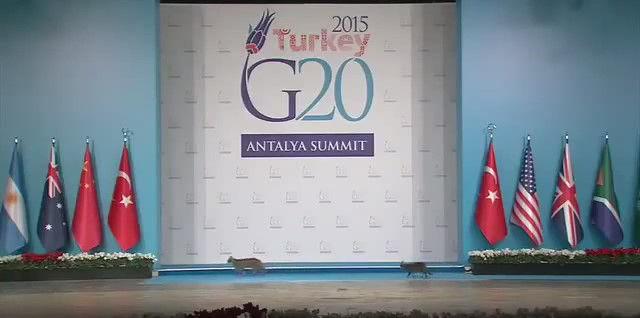 G20 侵入者 猫に関連した画像-03