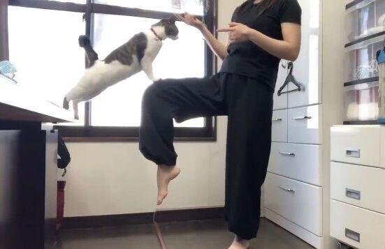 蹴り解説動画 猫乱入 癒やしに関連した画像-07