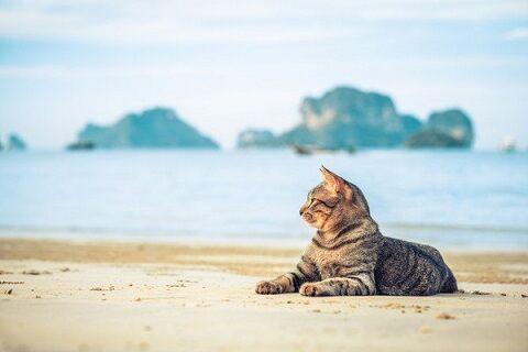 猫の島激減毒エサ高齢者に関連した画像-01