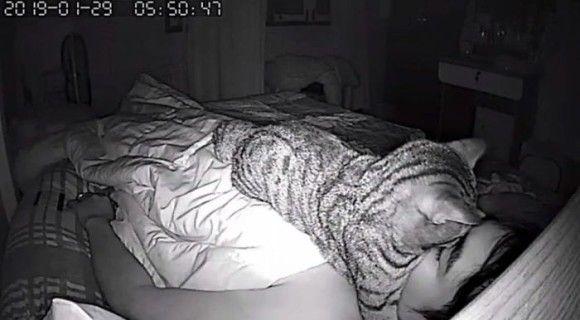 猫 就寝時 行動に関連した画像-05