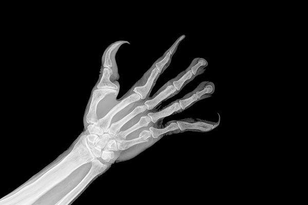 進化生物学者 スマホ向け 進化した手に関連した画像-04