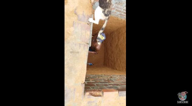 ネコ 穴 脱出 救出 猫 に関連した画像-10