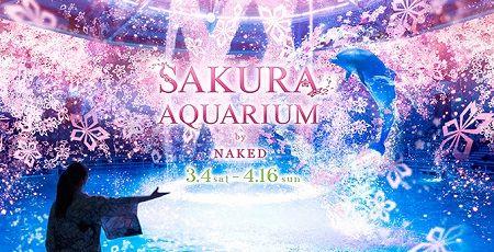 【幻想的】水族館に満開の桜が出現する「サクラアクアリウム」がアクアパーク品川で開催!桜の海でイルカショーも!なにこれ綺麗すぎるだろ・・・