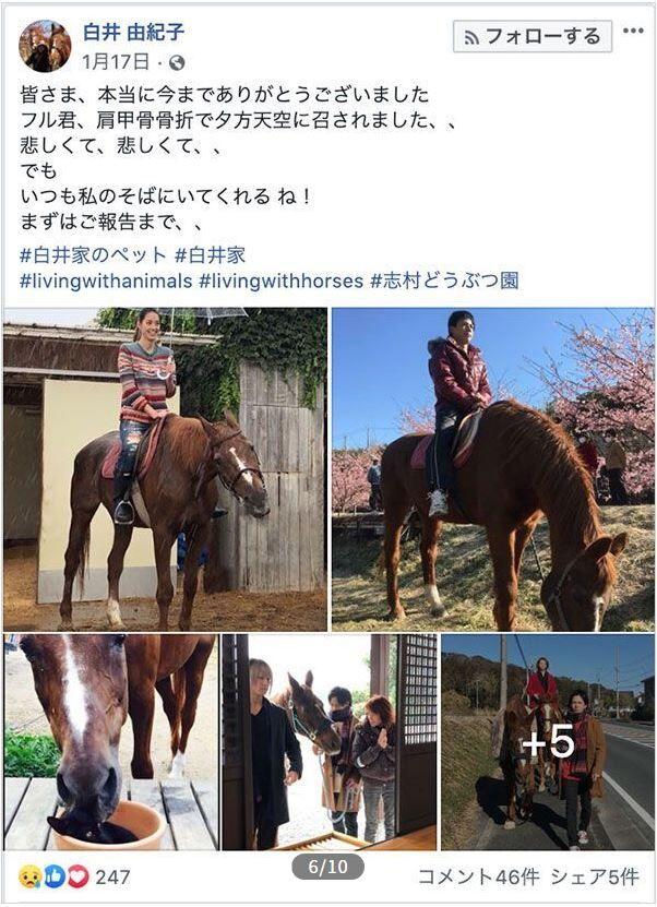 志村どうぶつ園 白井家 愛馬 バラバラ 違法解体に関連した画像-04
