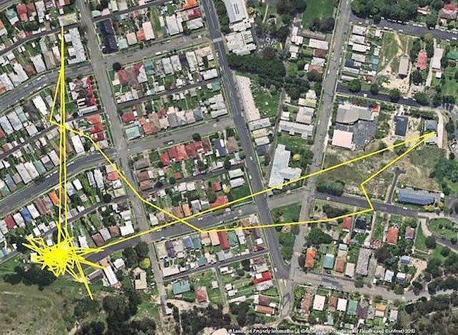 夜間 ネコ 猫 距離 移動 GPS 広範囲 帰巣本能 本能に関連した画像-07