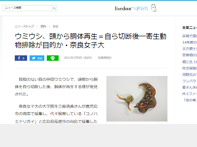 ウミウシ 再生 寄生動物 排除に関連した画像-02