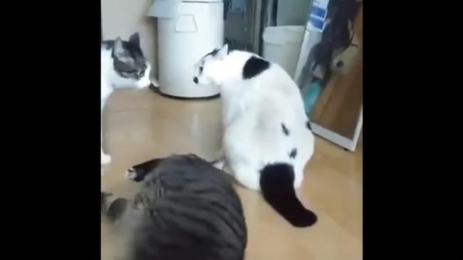 猫 喧嘩 仲裁に関連した画像-06