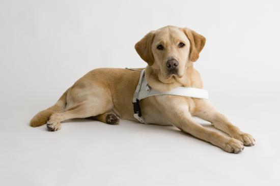 盲導犬 虐待に関連した画像-01