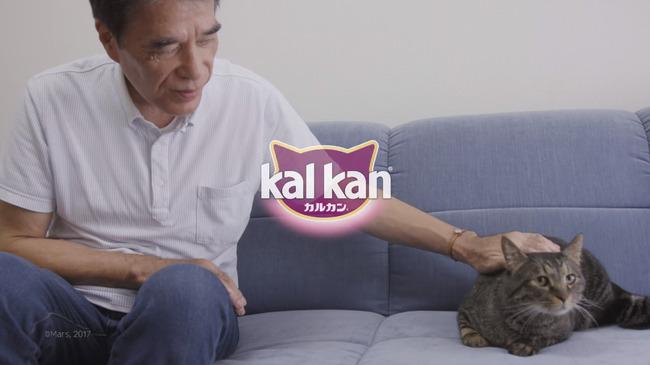 猫 かるかん 声 病気に関連した画像-22