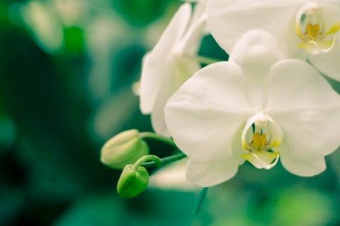 スポーツ選手 犯人 拉致 ランの花に関連した画像-01