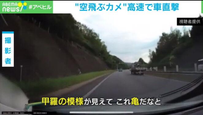 カメ 高速道路 甲羅 直撃に関連した画像-03
