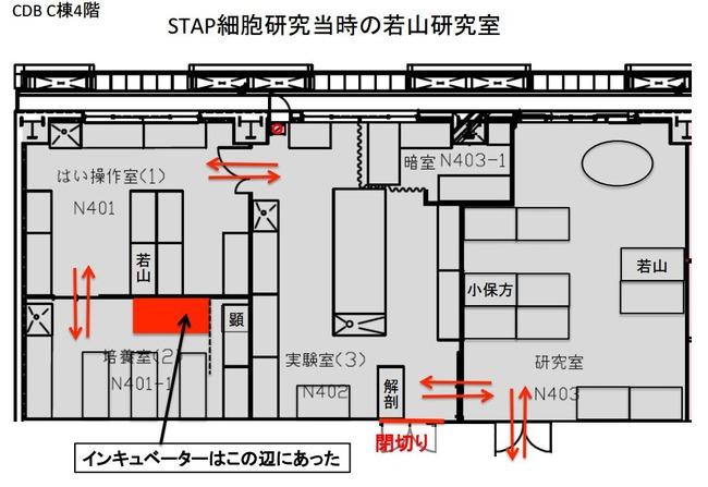 STAP細胞 ES細胞 小保方晴子に関連した画像-08