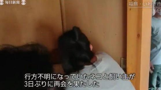台風19号 猫 行方不明 再開 動画に関連した画像-03