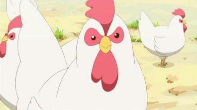 ニワトリ 暑い 養鶏場に関連した画像-01