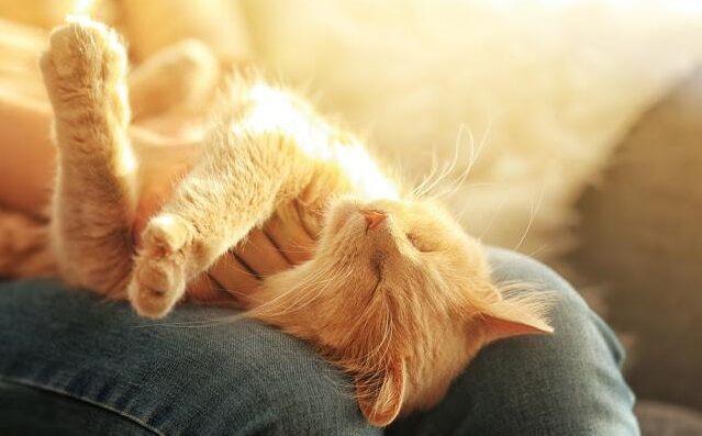 在宅ワーク 猫 フェイク膝に関連した画像-01