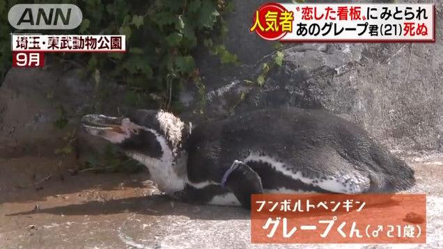 けものフレンズ けもフレ 東武動物公園 グレープ フルルに関連した画像-03