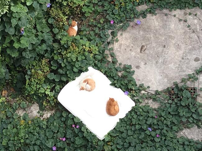 マンション ベランダ 布団 猫に関連した画像-03