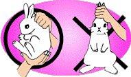 ウサギ 虐待 カップル 日本人に関連した画像-04
