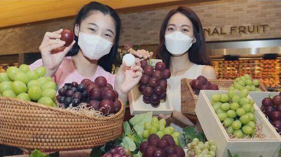 韓国 ブドウ ルビーロマン パクリ栽培 国内品種 海外流出に関連した画像-01