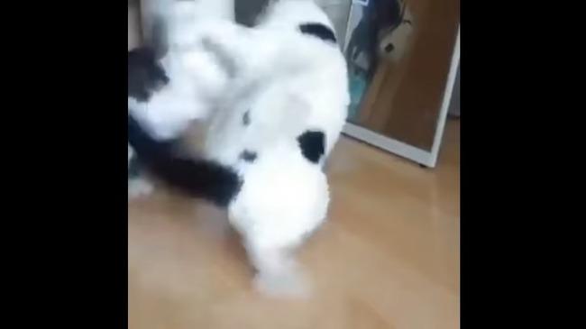 猫 喧嘩 仲裁に関連した画像-04