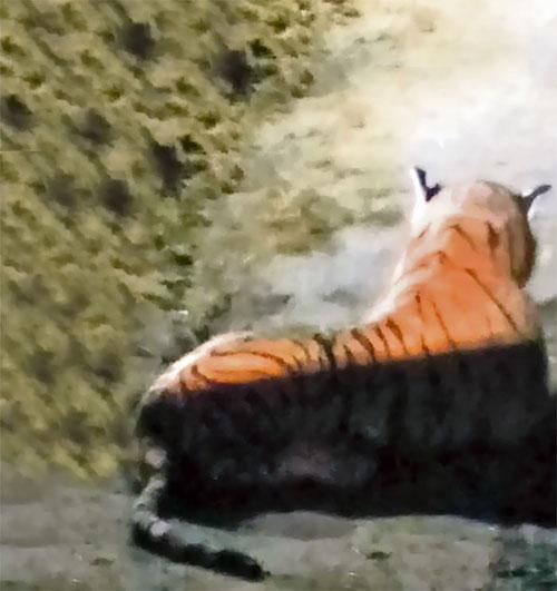 野生 トラ 通報 特殊部隊に関連した画像-03