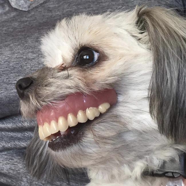 入れ歯 飼い犬 昼寝に関連した画像-03