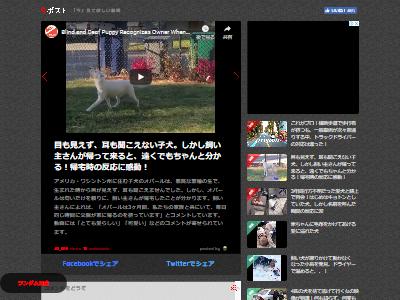 全盲 犬 感動に関連した画像-02