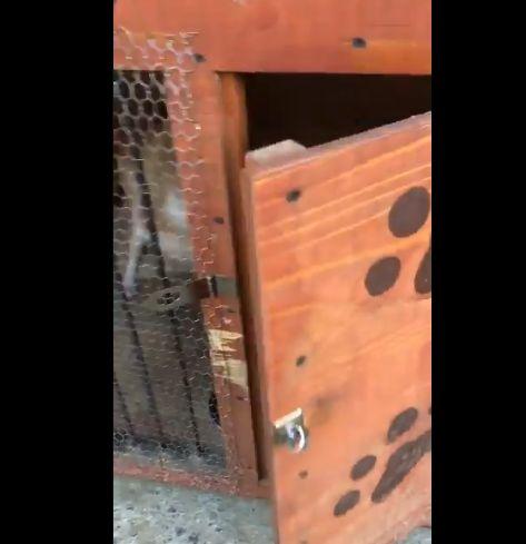 バイオハザード ゾンビ 犬 洋館に関連した画像-05
