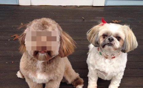 人面犬に関連した画像-01