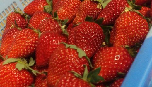 うどん粉病 イチゴ 農園 サバゲーに関連した画像-01