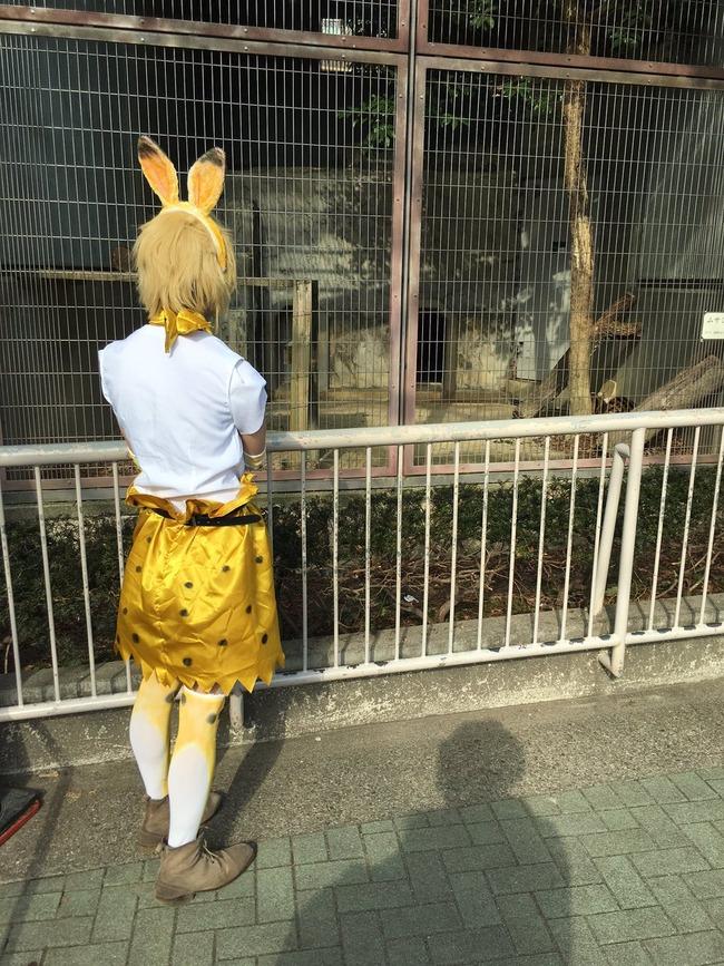 けものフレンズ コスプレ 動物園に関連した画像-02