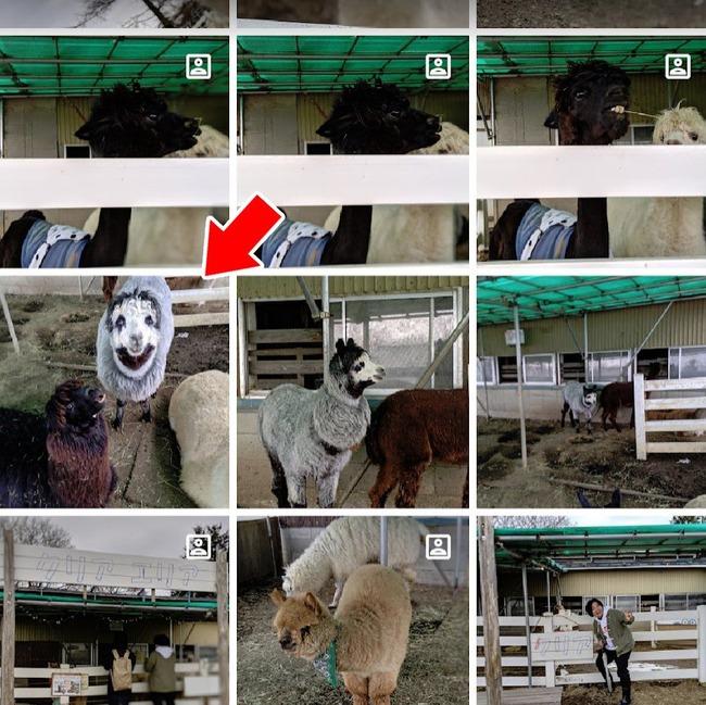 羊 写真 不気味に関連した画像-02