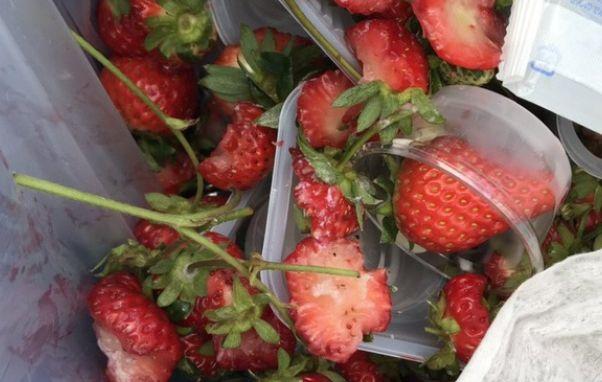イチゴ イチゴ農家 ヘタ 贅沢食い 酷いに関連した画像-01