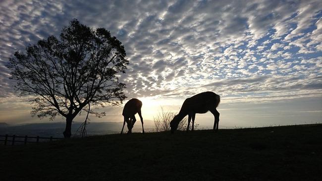 アフリカ 奈良 鹿 奈良公園に関連した画像-02