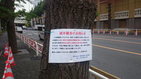 街路樹に関連した画像-01