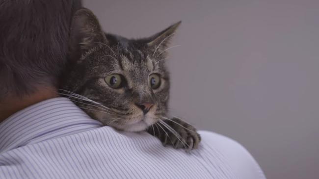 猫 かるかん 声 病気に関連した画像-01