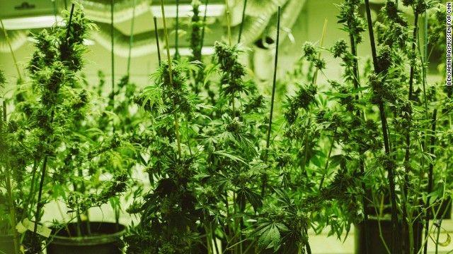 ワシントン 大麻 マリファナに関連した画像-01